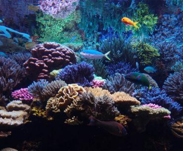Visiting The Downtown  Aquarium in Denver